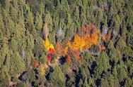 Autumn forest near Bariloche Stock Photos