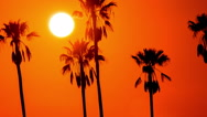 Time Lapse - Beautiful Sunset Through Palm Trees Stock Footage