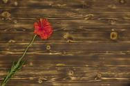 Poppy on a wooden background Stock Photos