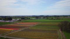 Aerial 4k Oregon flower farm Stock Footage