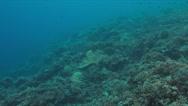 Grey reef shark 4k Stock Footage