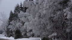 4k Snowy frozen trees close up near street in the mountain range Harz Stock Footage