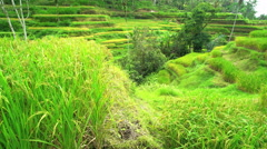 UNESCO world heritage agriculture site in Bali with male farm worker working in Stock Footage