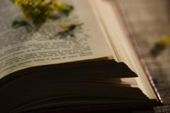 Thick book lying open with flowers spread on top, beautiful night light setting Stock Photos