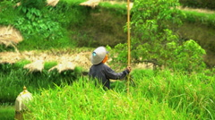 Traditional rice farming with female in conical hat growing food crops in Stock Footage