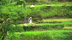 Bali, Indonesia - Green hillside rice terraces of World Heritage Stock Footage