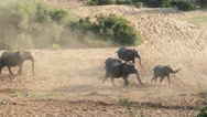 Elephant herd walking through dry river bed Stock Footage