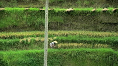 Green hillside rice terraces of World Heritage Site in Bali with female worker Stock Footage