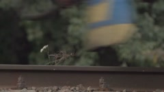 The train hit by a flower. Stock Footage