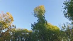Empty children's playground. Autumn city landscape. Slow motion steadicam Stock Footage