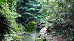 River in the lowland of jungle. Stock Footage