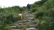 Hiker and dog climbing steep mountain slope Stock Footage