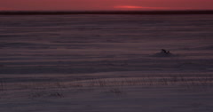 Snow blowing through arctic grass in post sunset light Stock Footage