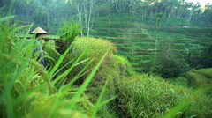 View of traditional Bali rice farmer working on tropical hillside field carrying Stock Footage
