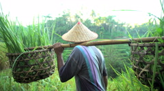 Portrait of Bali man collecting rice plants in bamboo baskets on tropical Stock Footage