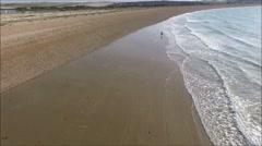 Shore dog walking Stock Footage
