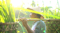 Tropical sun flare view of traditional Bali rice farmer working on hillside Stock Footage