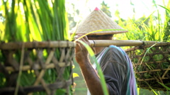 Male manual worker carrying baskets of gathered rice crop from tropical hillside Stock Footage