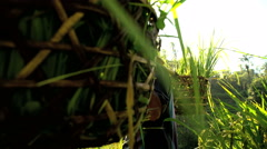 Indonesian traditional male worker on sun flare hillside in rice field Stock Footage