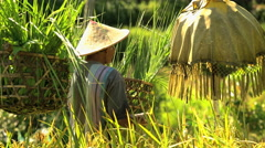 Indonesian traditional male worker on hillside with umbrella protecting tropical Stock Footage