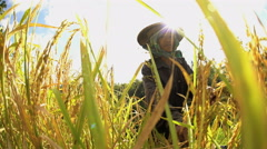 Indonesian traditional female manual worker on terraced rice field hillside Stock Footage