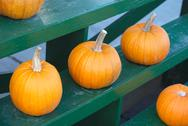 Halloween pumpkins for thanksgiving on green rack at the market Stock Photos
