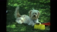 1974: cute happy dog wagging it's tail wants to play fetch with ladies visiting Stock Footage