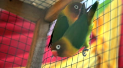 Tropical love birds in cage sold as pets or given as presents Bali Indonesia Stock Footage