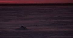 Magenta light on blowing snow over frozen tundra at dusk Stock Footage