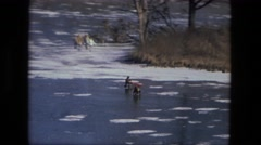 1974: snow playing is seen FORT WAYNE, INDIANA Stock Footage