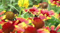 Bee flying from flower to flower Stock Footage
