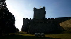 Sheep for the castle of Bentheim Stock Footage