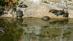 Turtles on the ramparts of the castle of Bentheim Stock Footage