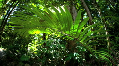 Tropical wilderness of Daintree Rainforest in Queensland Australia with sun Stock Footage