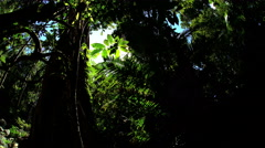 Sun flare through tree canopy and lush green foliage of Daintree Rainforest Stock Footage