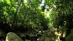 Canopy of tropical rainforest palm trees and rocks in Daintree National Park in Stock Footage