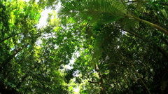 Ecotourism site of Daintree Rainforest in Queensland Australia with sun flare Stock Footage