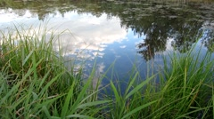 Sky Reflection over the Pond Birds Turtles Dragonflies Stock Footage