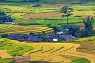 Terraced rice fields in Vietnam Stock Photos