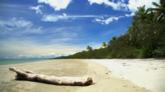 Driftwood on sand of Coral sea beach with lush green vegetation of Daintree Stock Footage