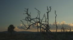 Time Lapse Of A Burned Landscape With Burned Bush Branches In Foreground Stock Footage