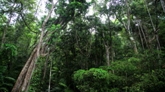 Woodland tree canopy and lush green tropical vegetation in Daintree Rainforest Stock Footage