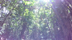 POV walking on tourist trail of Daintree Rainforest through woodland trees with Stock Footage