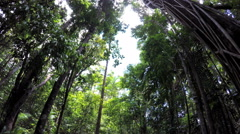 POV walking in tropical climate through lush woodland vegetation of Daintree Stock Footage