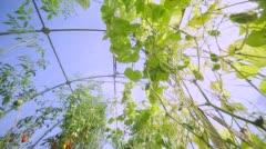 A small farm hothouse for agricultures Stock Footage