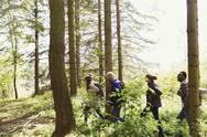Friends hiking in a row in sunny woods Stock Photos