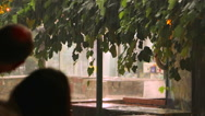 People watch how it's raining in the city. Stormy rain falling in the city Stock Footage