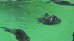 Seals swim and turn somersaults Stock Footage