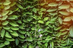 A close up of leaves, ideal for background or wallpaper Stock Photos