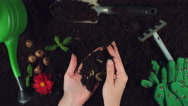 4k Gardening Composition of Hands Finding in Soil Money Coins Stock Footage